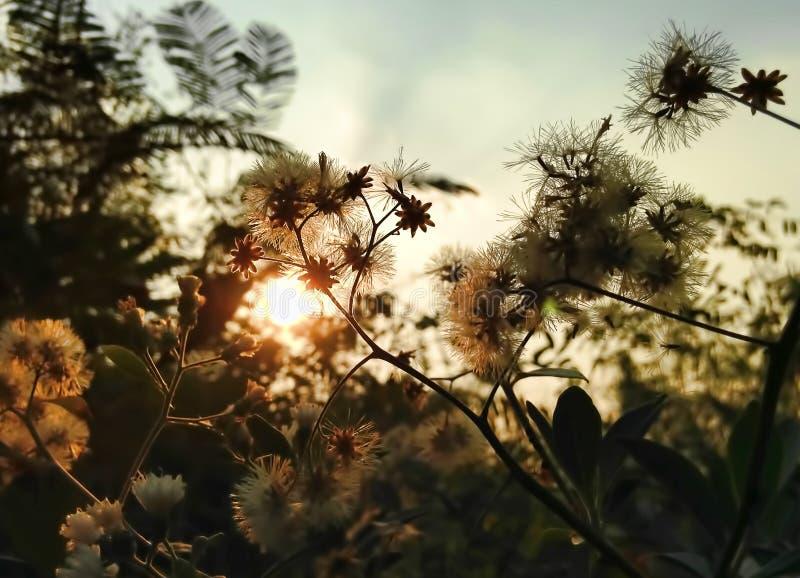 Солнце вечера с цветками перед заходом солнца стоковое фото rf