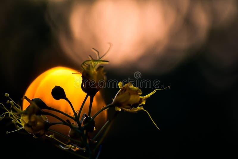 солнце за цветком стоковое изображение