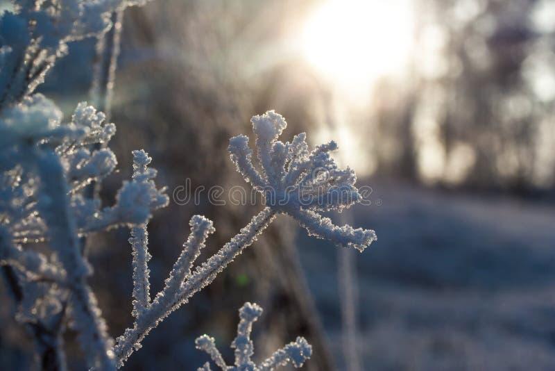 Солнце и заморозок стоковая фотография rf