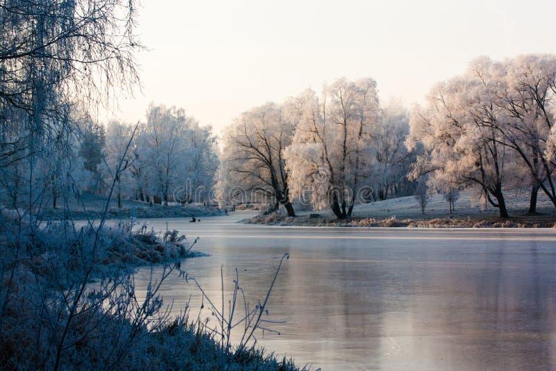 Солнце и заморозок стоковая фотография