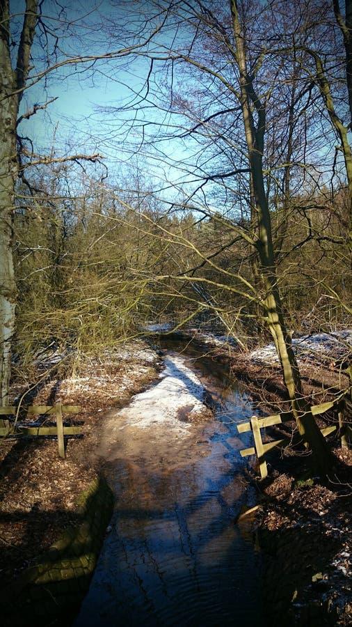 Солнце и снег в лесе стоковые изображения rf