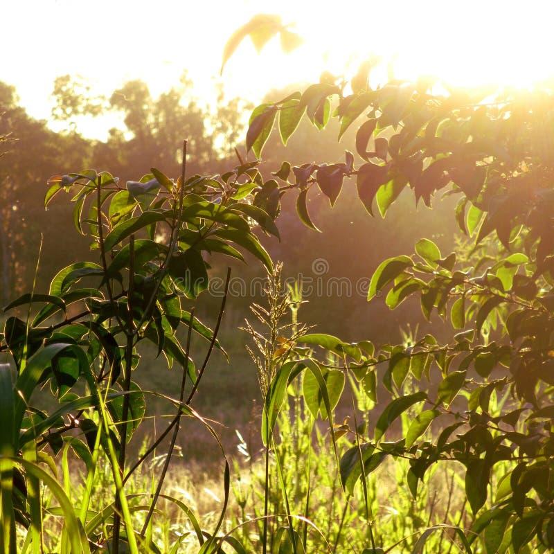 Солнце и трава стоковые изображения rf