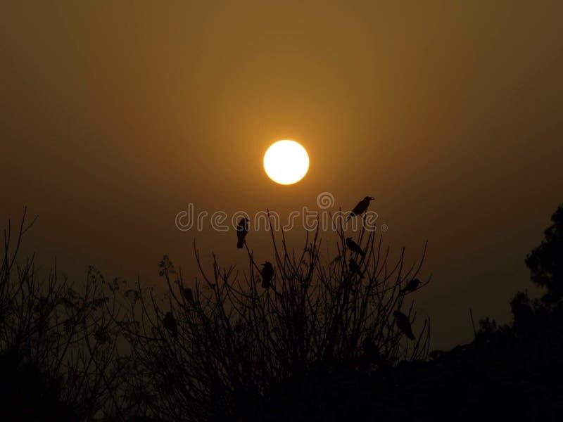 Солнце посветит на мне стоковые изображения
