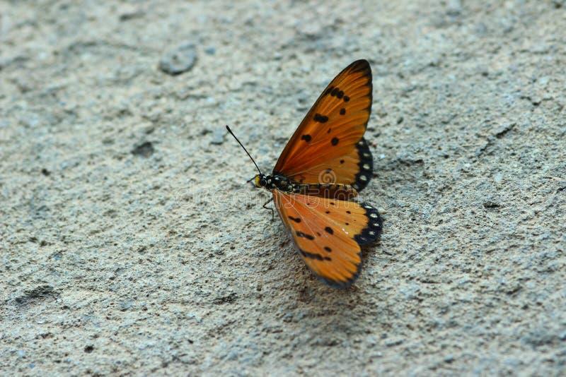 Солнце после полудня бабочки теплое стоковое фото