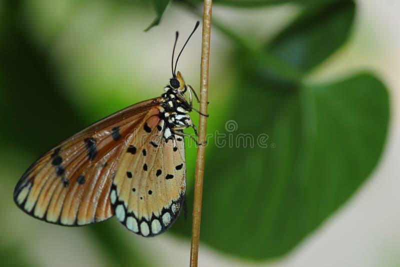 Солнце после полудня бабочки теплое стоковые фотографии rf