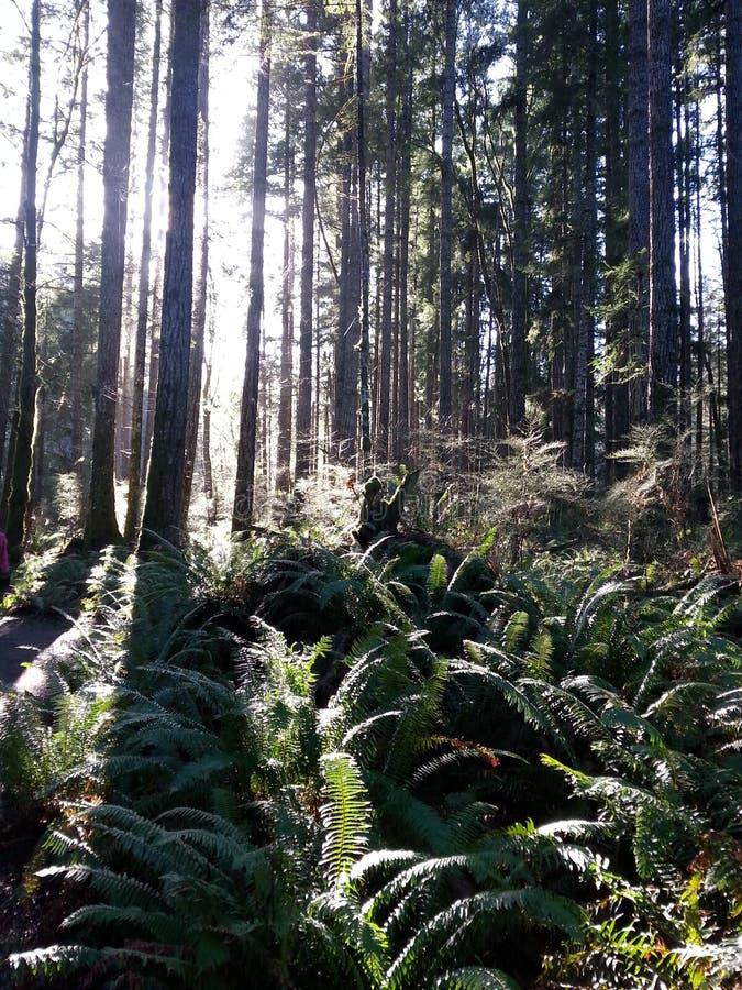 Солнце расцеловало лес стоковое фото rf