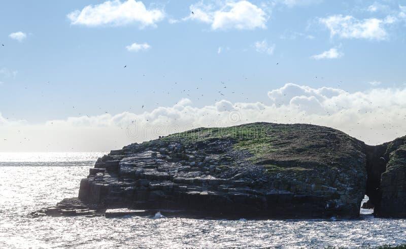 Солнце светит на острове птицы в Maberly, Ньюфаундленде стоковое фото