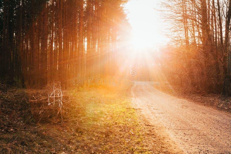 Солнце светя над дорогой, путем, дорожкой до конца стоковые фото