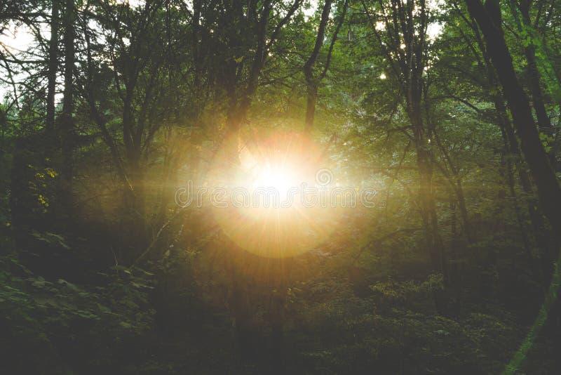 Солнце светя через темный лес стоковая фотография