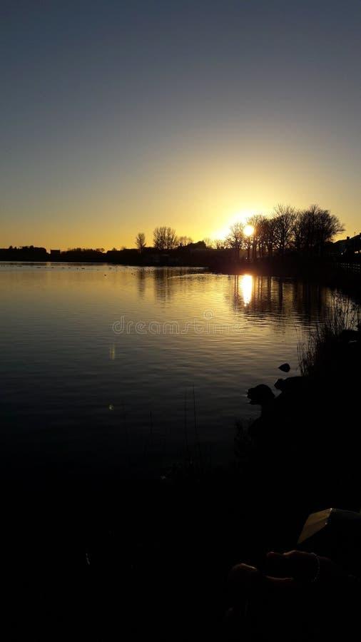 Солнце светя через Tress стоковое фото rf