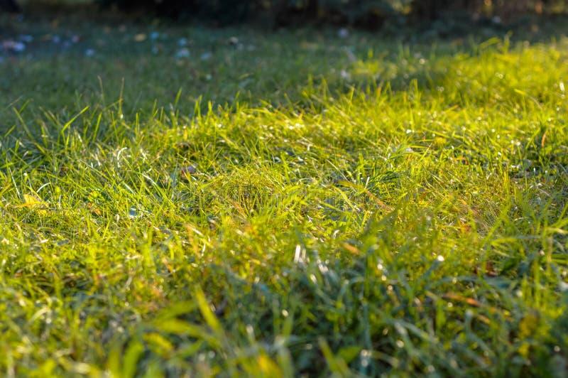 Солнце сияющее через зеленую траву стоковое изображение