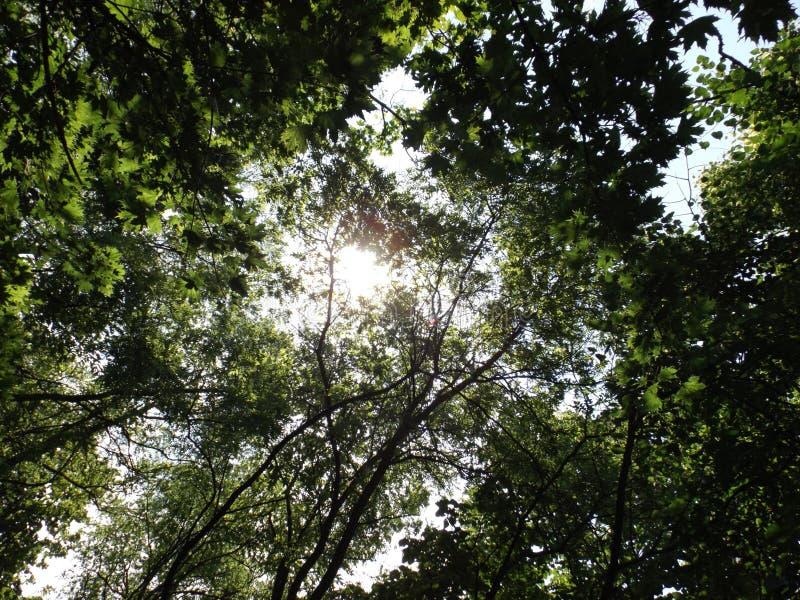 Солнце спрятанное среди деревьев стоковые изображения rf