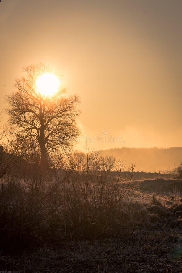 Солнце управляет туманом от замороженного поля, красиво конспектируя силуэт дерева, предыдущее морозное утро весны стоковое фото rf
