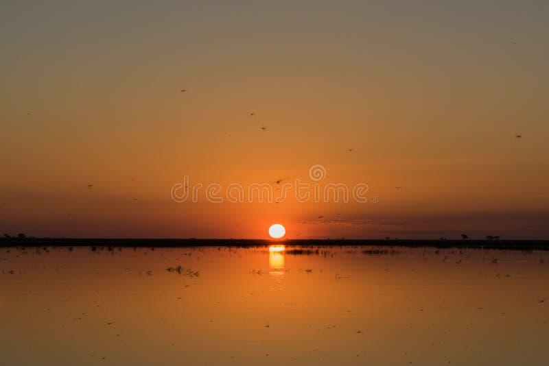 Солнце устанавливая над рекой с много dragonflies стоковые фотографии rf