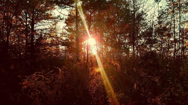 Солнце установило в древесины стоковые фото