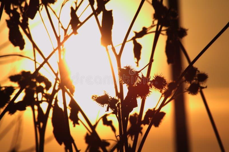 Солнце через заусенец стоковая фотография