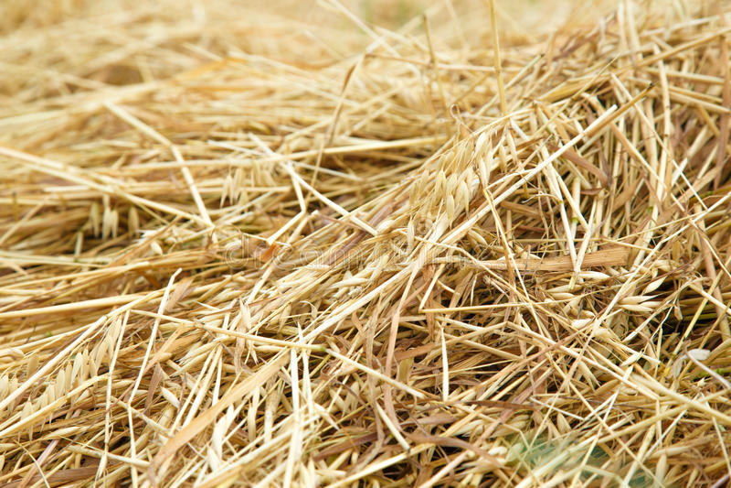 Солома сена в поле стоковые изображения