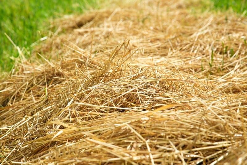 Солома сена в поле стоковые фото
