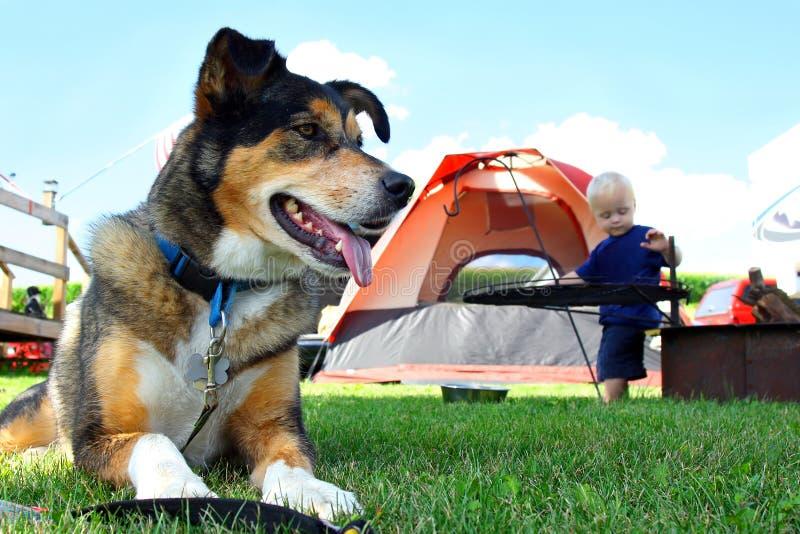 Содружественный располагаться лагерем собаки стоковое изображение