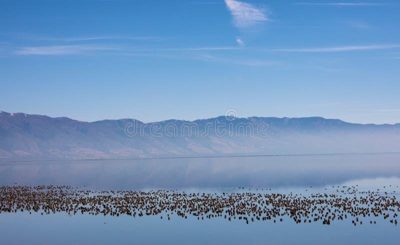 Download соль большого озера стоковое изображение. изображение насчитывающей взгляд - 81813197
