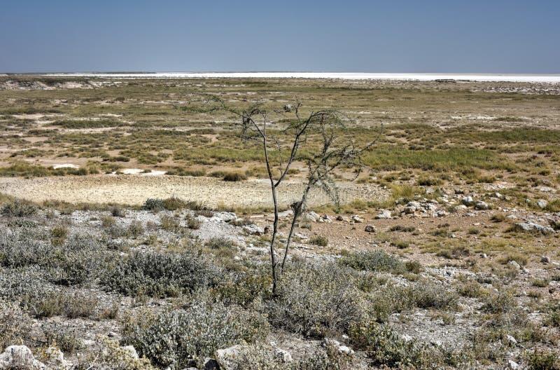 Соль все- Намибия Etosha стоковые изображения