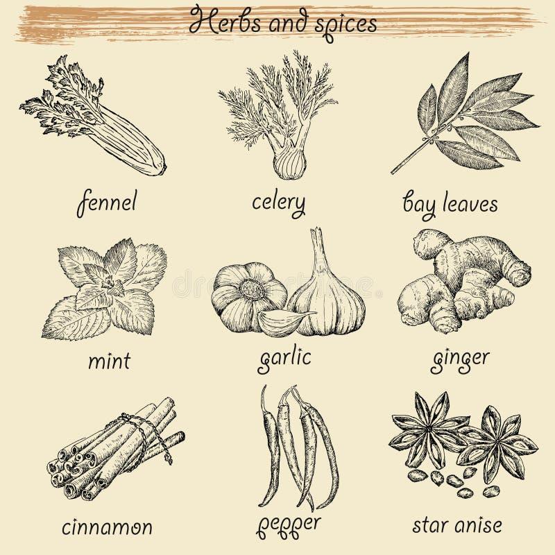 соль rosemary перца листьев трав чеснока cardamon залива spices ваниль иллюстрация штока
