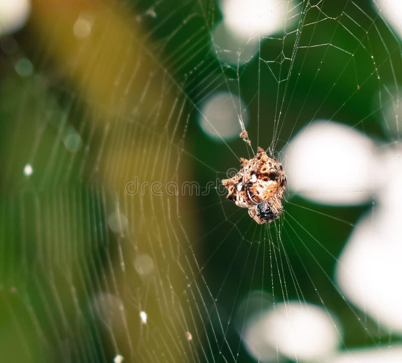 Спайдер в гнезде стоковое фото