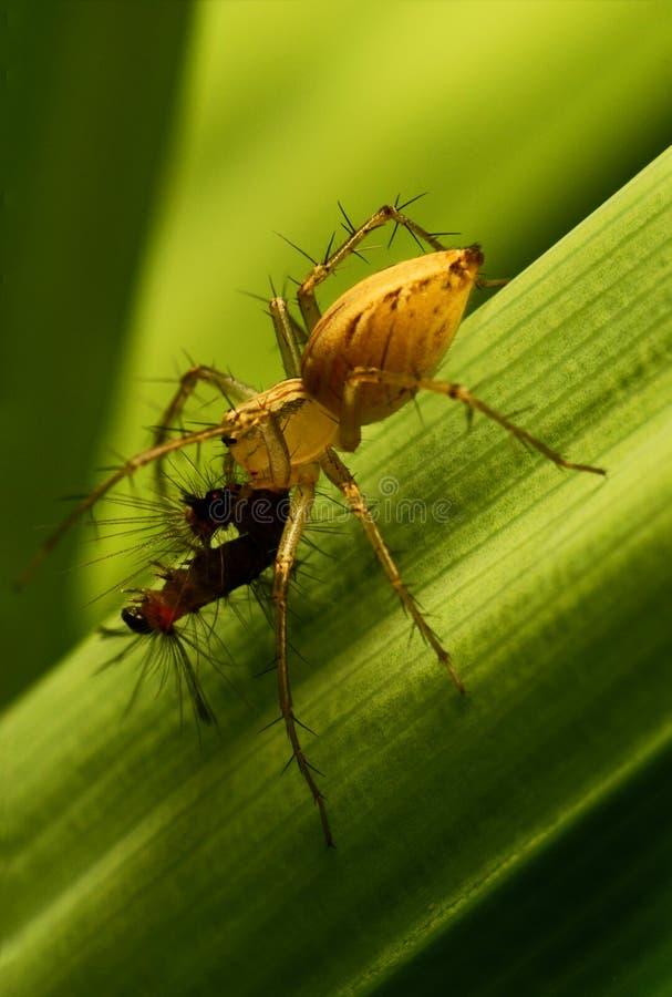 спайдер гусеницы стоковая фотография rf