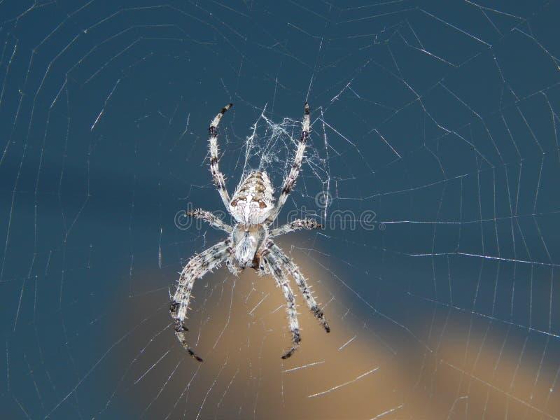Спайдер в ноче стоковая фотография rf