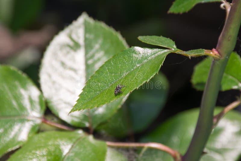Спайдер на листьях стоковое изображение
