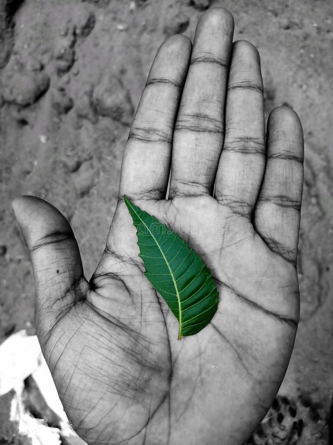 Спасительная жизнь спасения земли спасения воды спасения дерева стоковое изображение rf