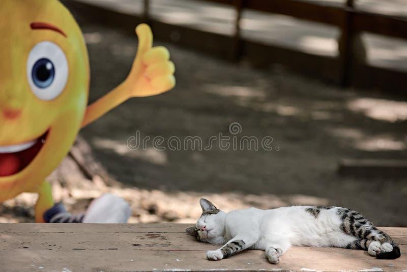 Спать кота внешний стоковая фотография rf