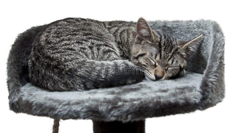 спать кота стоковое изображение rf