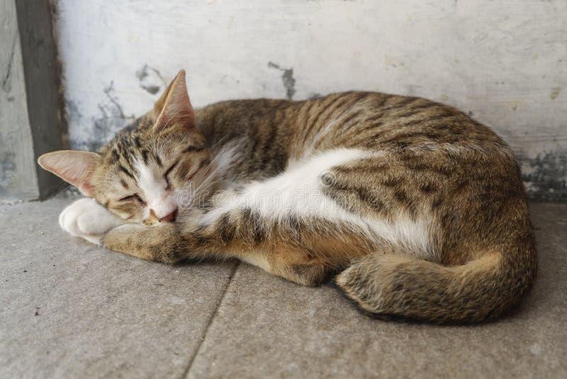 Спать кота стоковые фотографии rf