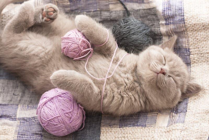 Download спать котенка стоковое изображение. изображение насчитывающей родословная - 18381215