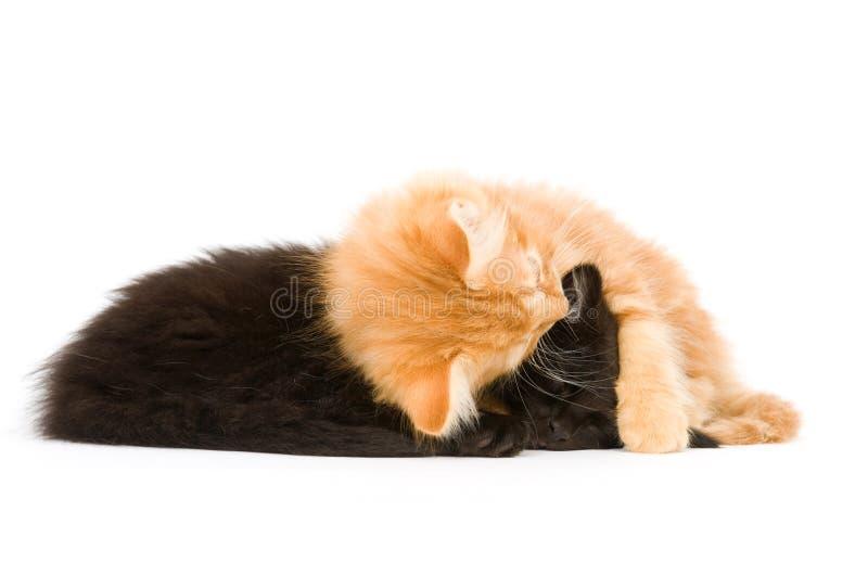 Download спать котят стоковое фото. изображение насчитывающей млекопитающие - 6869966
