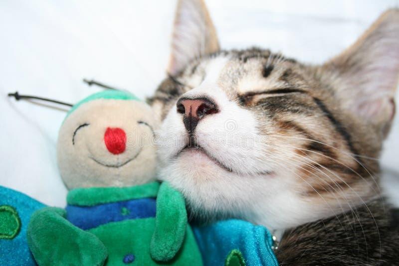 спать марионетки кота стоковые фото