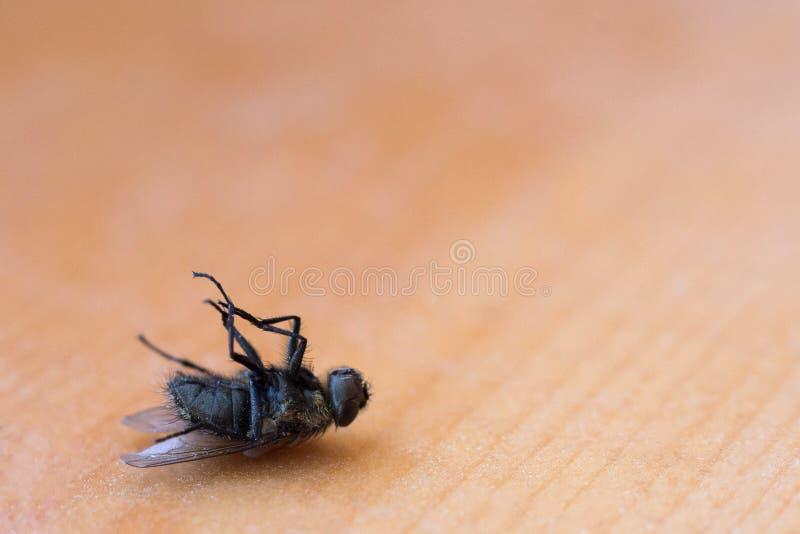 Спать мухы дома весны стоковое изображение