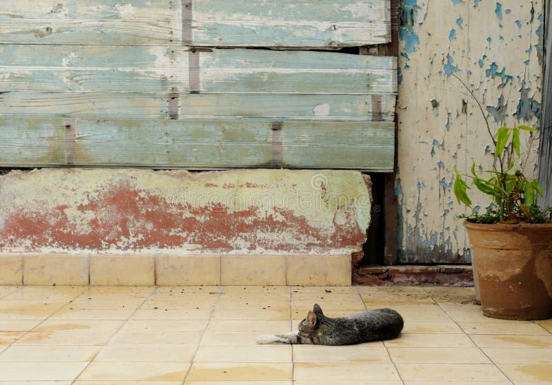 спать сада кота стоковая фотография