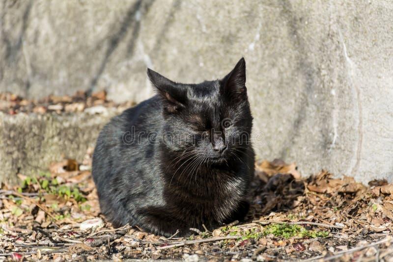 Спать черного кота внешний стоковое изображение