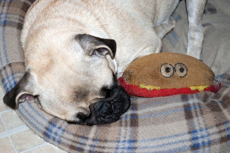 спать щенка pug стоковая фотография rf