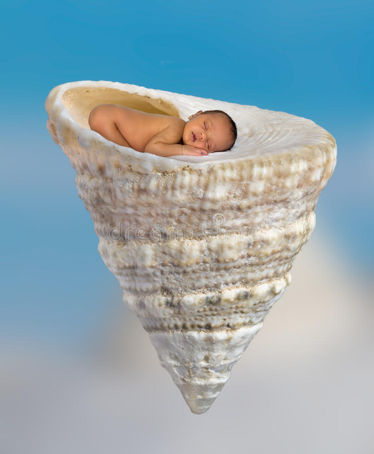 Спать newborn в seashell стоковое изображение