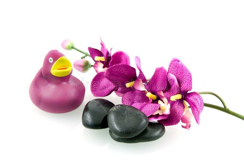 спа пурпура установленная стоковые изображения rf
