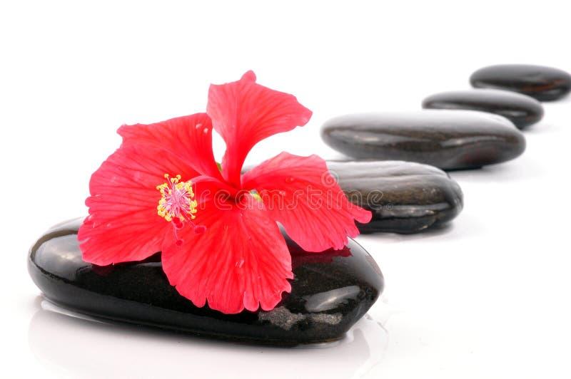 спа hibiscus стоковое фото