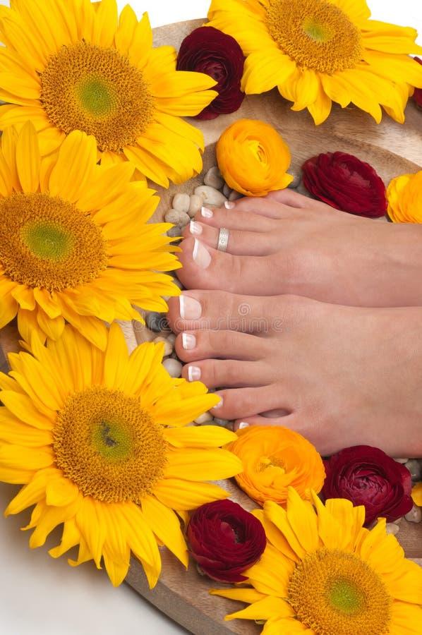 Download спа pedicure стоковое фото. изображение насчитывающей manicure - 18388534