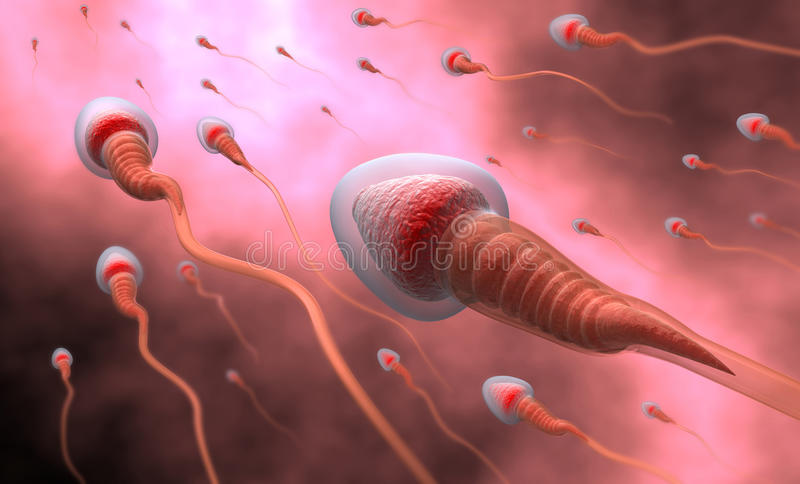 сперма осеменением естественная бесплатная иллюстрация
