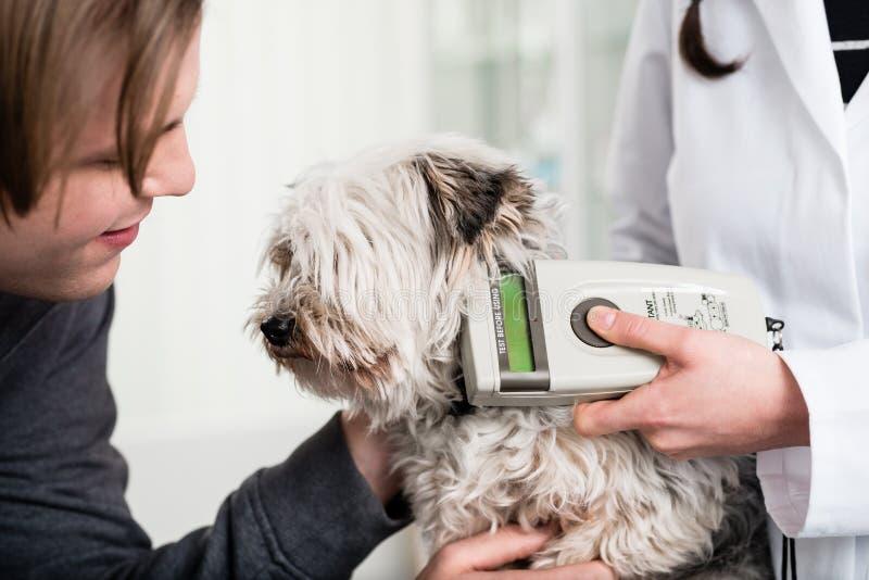 Специалист по ветеринара рассматривая больную собаку в клинике стоковые изображения rf