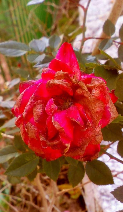 специальный цветок стоковая фотография rf