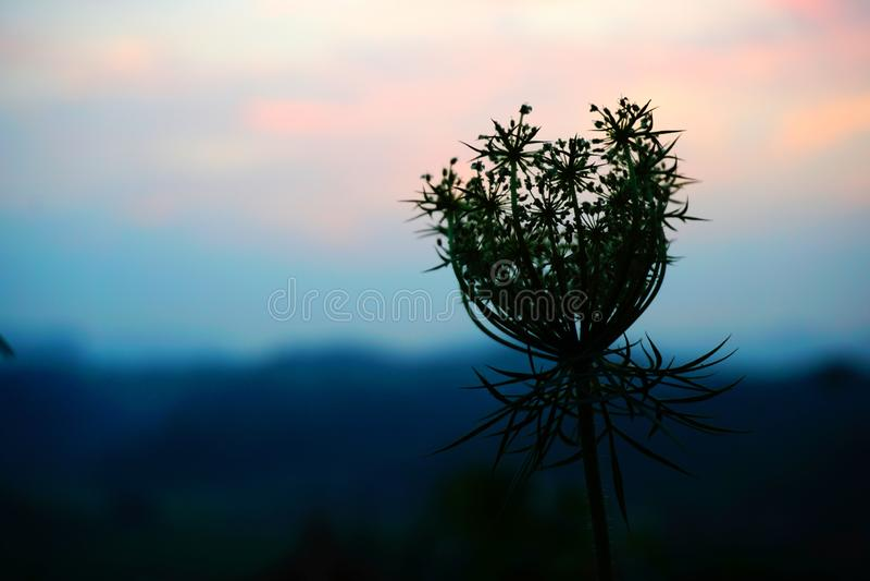 Специальный силуэт цветка на заходе солнца стоковое фото