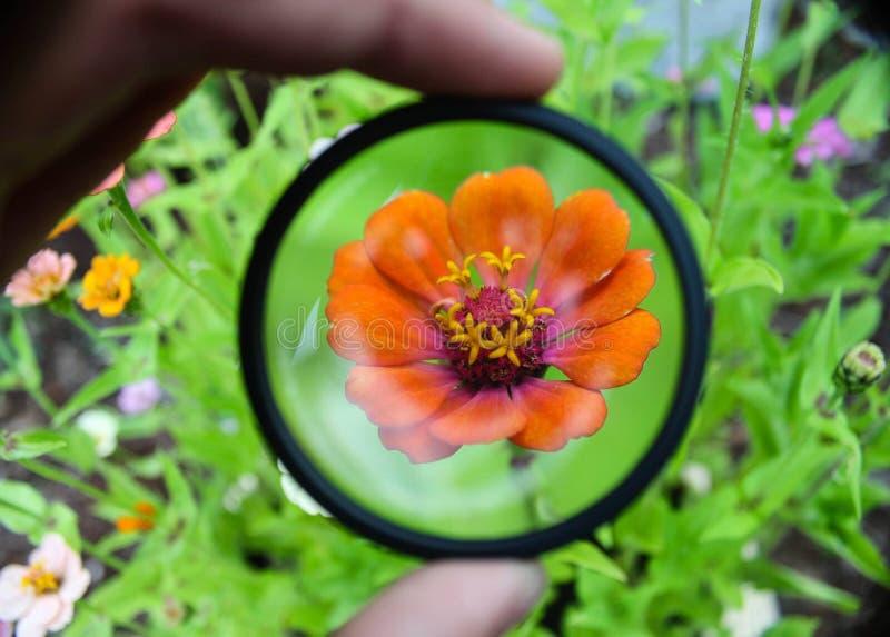 Специальный цветок в саде стоковая фотография